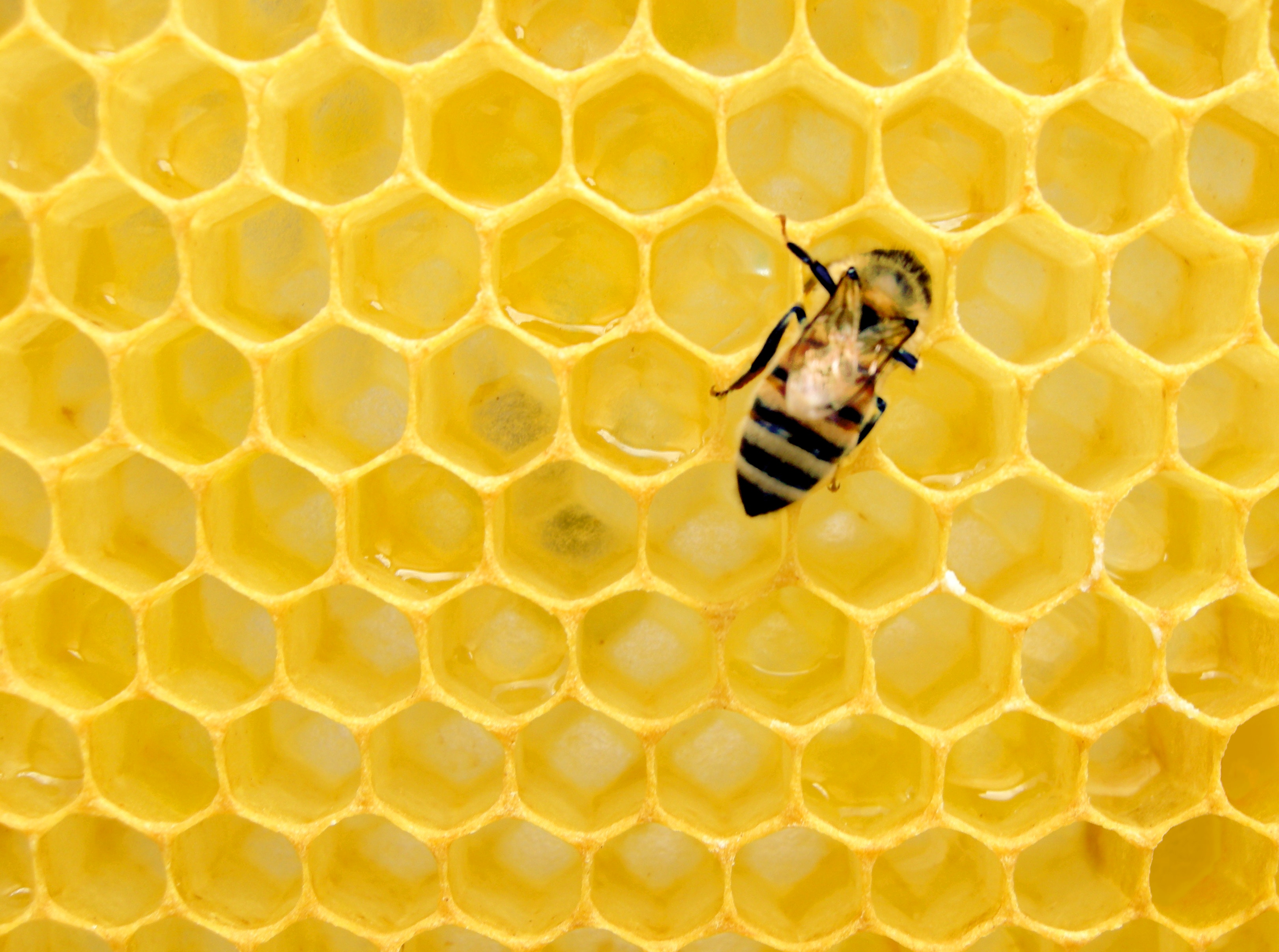Benefit Corporations & Why They're All the Buzz